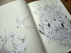 Into the Wild - Daisy Fletcher - colouring book